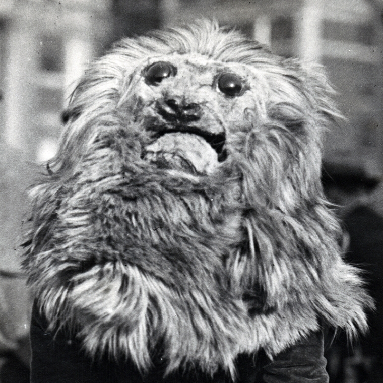 David Boles, Columbia University in the City of New York, circa 1922 lion mascot!